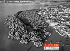 环大亚湾新区将建21条景观大道 构建绿地生态网络