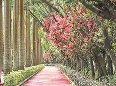 出门就有绿道!深圳已建成全长约2448公里的绿道网络